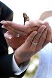 De handen die van het huwelijk vlinder houden Stock Afbeeldingen