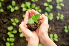De handen die van het wijfje jonge plant houden royalty-vrije stock foto's