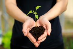 De handen die van het wijfje jonge plant houden stock fotografie