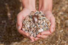 De handen die van vrouwen zeeschelpen en stenen houden Stock Afbeelding