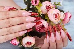 De handen met het lange rode kunstmatige Frans manicured spijkers houdend roze bloemen toenam stock afbeeldingen