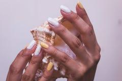 De handen met mooi manicured spijkers en overzeese shell royalty-vrije stock foto