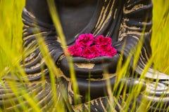 De handen van Boedha met rode bloemen Royalty-vrije Stock Afbeeldingen
