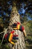 De Handen van de herfst op een Boomstam van de Boom Royalty-vrije Stock Afbeeldingen