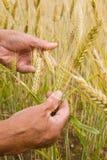 De handen van de landbouwer stock afbeeldingen