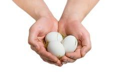 De handen van de landbouwer met eieren stock fotografie