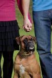 De Handen van de paarholding met hun Hond Stock Fotografie