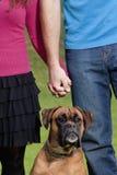 De Handen van de paarholding met hun Hond Stock Foto's