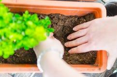 De handen van de vrouw graven gat in klei Uit nadruk groene bloem Stock Foto