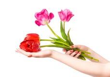 De handen van de vrouw met bloemen stock foto