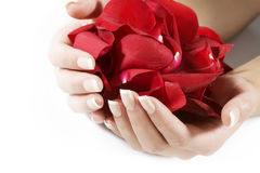 De handen van de vrouw met roze bloemblaadjes royalty-vrije stock foto's