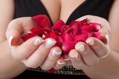 De handen van de vrouw met rozen Stock Fotografie