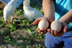 De handen van het jonge geitje met eieren Royalty-vrije Stock Foto's