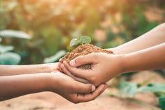 De handen van kinderen werken samen om bossen terug naar aard, Wilde installatieconcept te kweken stock afbeelding