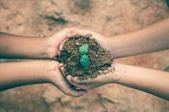 De handen van kinderen werken samen om bossen terug naar aard, Wilde installatieconcept te kweken stock fotografie