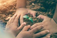 De handen van kinderen werken samen om bossen terug naar aard, Wilde installatieconcept te kweken royalty-vrije stock foto