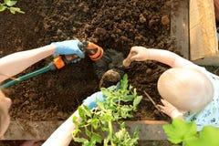 De handen van de vrouw en een kind die tomatenzaailingen in serre planten Organisch het tuinieren en de groeiconcept royalty-vrije stock foto's