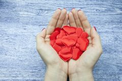 De handen van vrouwen houden vele rode harten in de palm tegen de houten achtergrond van jeanskleur, het concept besparingsliefde royalty-vrije stock foto's