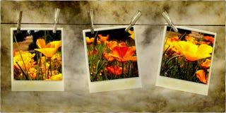 De hangende Foto's van de Bloem royalty-vrije stock foto