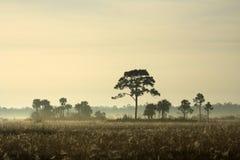De Hangmat van Everglades Royalty-vrije Stock Fotografie