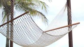De hangmat wordt opgeschort tussen palmen stock videobeelden