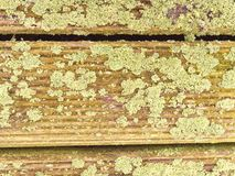 De hardhoutraad van hardhout wordt gemaakt verzet zich tegen verwering die Houten pijler boven overzees stock fotografie