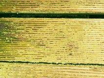 De hardhoutraad van hardhout wordt gemaakt verzet zich tegen verwering die Houten pijler boven overzees royalty-vrije stock foto