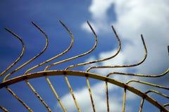 De Hark van het hooi een Landbouwbedrijf voert uit Royalty-vrije Stock Foto's