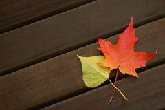 De Harmonie van de kleur Stock Fotografie