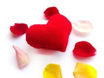 De hartstocht van de het bloemblaadjebloem van de zorg en van de liefde stock foto