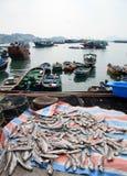 De haven Hongkong van vissen Royalty-vrije Stock Foto's