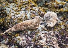 De Havenverbindingen van Alaska stock foto's