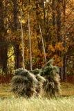 De haver is droog op een traditionele manier in noordelijk Zweden stock foto