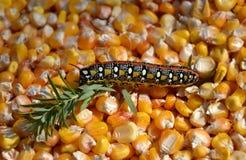 De havik van Caterpillar Royalty-vrije Stock Afbeeldingen