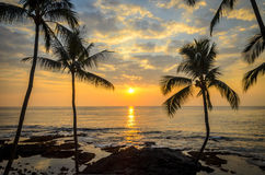 De Hawaiiaanse Zonsondergang van de Palm Royalty-vrije Stock Foto