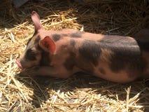 De heer bacon royalty-vrije stock afbeelding