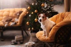 De Hefboom Russel van de hond Kerstmisseizoen 2017, nieuw jaar Stock Fotografie