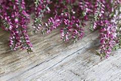 De heide op houten raad vat bloemenachtergrond samen Royalty-vrije Stock Fotografie