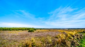 De de heidegebieden en bossen in het natuurreservaat van Hoge Veluwe royalty-vrije stock afbeeldingen