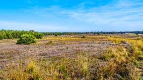 De de heidegebieden en bossen in het natuurreservaat van Hoge Veluwe royalty-vrije stock afbeelding