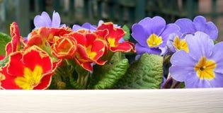De heldere bloemen van de Lente. Royalty-vrije Stock Foto