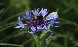 De heldere bloemen zijn volledig van vitaliteit royalty-vrije stock foto's