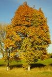 De de heldere boom en hemel van de colorfullherfst stock afbeeldingen