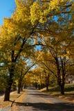 De heldere Herfst stock fotografie