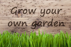 De heldere Houten Achtergrond, Gras, kweekt Uw Eigen Tuin Royalty-vrije Stock Foto's