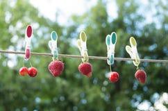 De heldere kleurenbessen zijn droog op wasknijpers Royalty-vrije Stock Foto