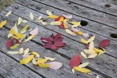 De heldere mooie brandwond van de herfstbladeren op een houten achtergrond stock fotografie