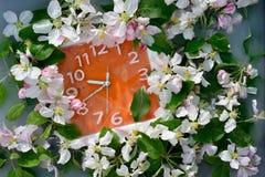 De heldere oranje muurklok met witte aantallen en de zilveren die pijlen door luxueuze veelvoudige witte bloemen van appelboom wo Royalty-vrije Stock Foto's