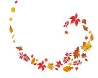 De heldere spiraalvormige grens van de herfstbladeren die op wit wordt geïsoleerd stock illustratie