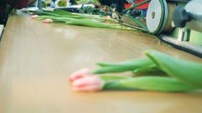 De heldere tulpen bewegen zich langs de vervoerder Bloemeninstallatie, geautomatiseerde machines voor bloemenproductie stock videobeelden